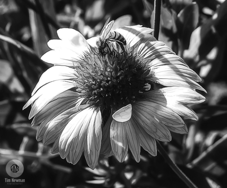 Black and White, Bee, Honey Bee, Flower, Buzz, Flying, Nectar